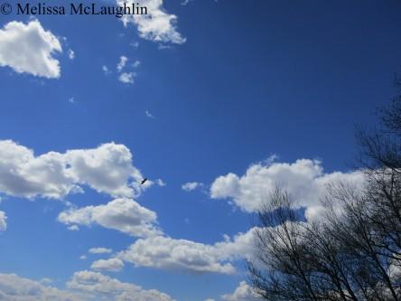 Camp Swatara sky 2015 058 watermark